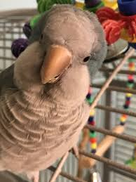 my parrot levi is naturally curious