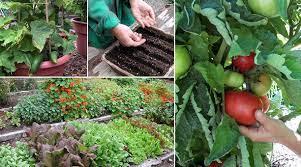 growing a vegetable garden epicurious