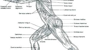 Human Coloring Pages Detail Human Body Coloring Pages Human Body
