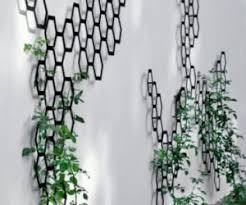 Climbing Plants That Give Your Home A New LookClimbing Plants Indoor