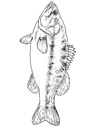 bass coloring pages bass coloring pages bass guitar coloring pages free bass coloring pages