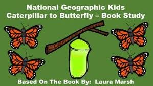 national geographic kids caterpillar to erfly book study this pack includes an anion guide review quiz glossary page voary review