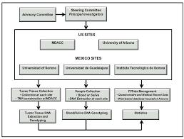 Ella Binational Breast Cancer Study Organizational Structure