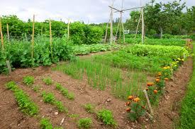 40 fantastic backyard vegetable garden