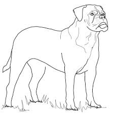 Small Picture Rottweiler favorite Dog Colouring pages Pinterest Dog