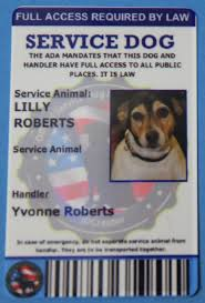 Doctors Note For Dog Custom Service Dog Id Mooserve Reviews