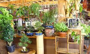indoor gardening. Beautiful Gardening Indoor Gardening Basics Intended Gardening Epic