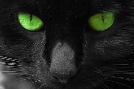 black cats with green eyes wallpaper. Delighful Eyes Black Cats With Green Eyes For Wallpaper H