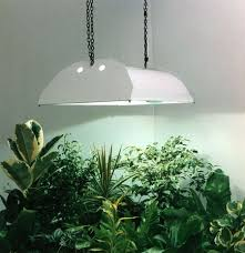 Lighting for houseplants Medium Sized House Growlights Fcssf Org Growing Indoor Plants With Grow Lights