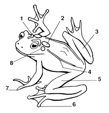 Parts Of A Frog Toadally Awesome Toad Facts Can You Identify The Parts Of A Frog