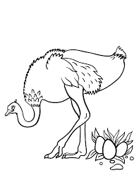 Small Picture Ostrich Coloring Pages
