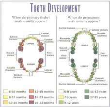 Teeth Growth Chart Taking Care Of Baby Teething Remedies