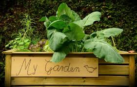 even a small above ground garden can provide big results