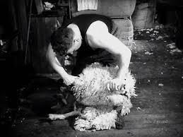 The Bowen technique – Shearing – Te Ara Encyclopedia of New Zealand