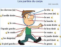 lichaam frans
