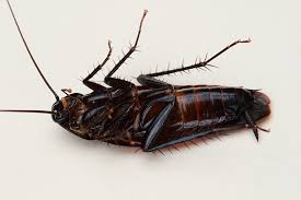 6 ways to keep roaches and ants away