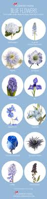 Light Blue Flower Names Our Favorite Blue Flowers Blue Wedding Flowers Wedding