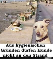 Aus Hygienischen Gründen Dürfen Hunde Nicht An Den Strand