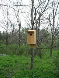 picture of eastern bluebird houses from hand tools