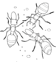 Leaf Cutter Ants Coloring Page Ants Go Marching Colouring Page