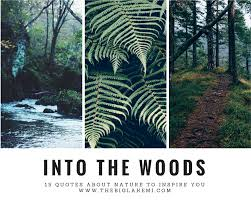 40 Beautiful Quotes About Nature And Wilderness To Inspire You Gorgeous Woods Quotes