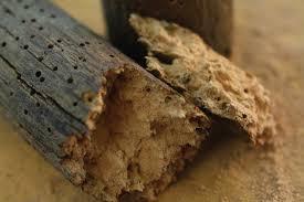Termites in wooden furniture