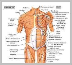 11 Unusual Internal Body Parts Chart