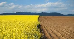 Ринок землі в Україні в 2021 році: перспективи, ціни, аналіз та інше