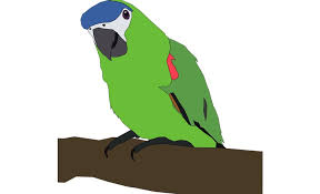 parrot information in my favourite bird parrot essay parrot bird information