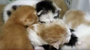 Tafsir Mimpi Melihat Kucing Melahirkan