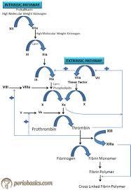 The Clotting Mechanism And Bleeding Disorders Periobasics Com