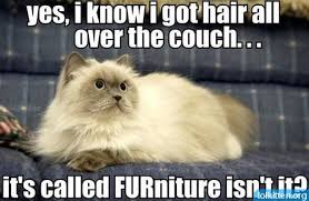 Image result for sunday cat images