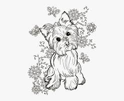 How to draw and color rainbow with sun and clouds. Yorkie Adult Coloring Pages Hd Png Download Kindpng