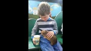 Harry Strokes a <b>Lovely Guinea Pig</b> - YouTube