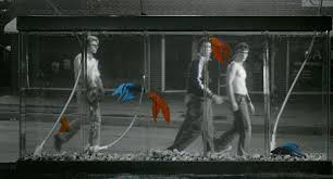 francis ford coppola s rumble fish reigns on criterion blu ray  francis ford coppola s rumble fish reigns on criterion blu ray balder and dash roger ebert