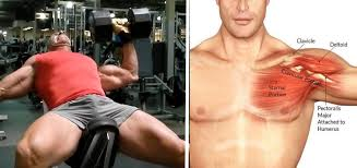 How To Increase Your Bench Press U2013 Bret ContrerasIncrease Bench Press Routine