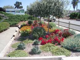Small Picture Landscape Designer Susan Rojas from Waterwise Botanicals designed