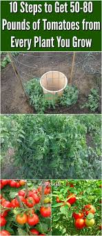 Easy Container Garden Ideas Plans And VideoContainer Garden Plans Tomatoes