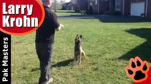 Dog Training Dog Training Hand Signals Vs Verbal Commands