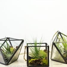 Air Plant Terrarium Cube Geometric Air Plant Terrarium Ps Terrariums