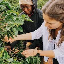 Bildergebnis für rehorik coffee
