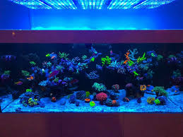 Salzwasserkoralle Marine Riffaquarium Führte Beleuchtung Beste LED Aquarium  Beleuchtung