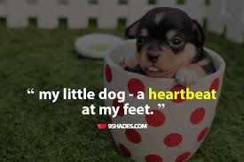 Dog Quotes Love And Loyalty Beauteous My Little Dog A Heartbeat At My Feet Download This Quote For