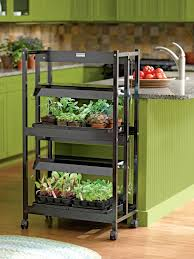 garden shelves. Two Tier Shelving Unit With Fluorescent Grow Lights Growing Seedlings In A Kitchen Garden Shelves F