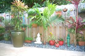 patio plants potted for privacy large around