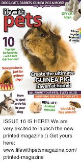 cats dogs and life dogs cats rabbits guinea pigs