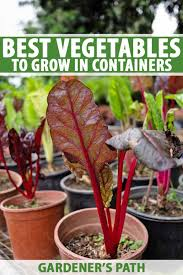 They bloom continuously from late spring all the way until frost. The Best 11 Vegetables To Grow In Pots And Containers Gardener S Path