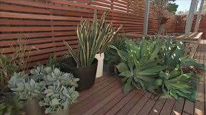 Small Picture Gardening Australia Fact Sheet A Succulent Garden
