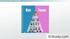 thomas malthus theory of human population growth video lesson the population pyramid
