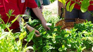 Stephanie Alexander Kitchen Garden Foundation Community Kitchen Garden Three In One